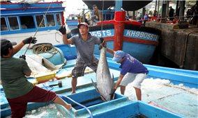 Về vùng quê của những tỷ phú cá ngừ
