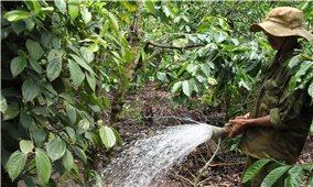 Nông dân Tây Nguyên tất bật chăm sóc cây cà phê sau Tết