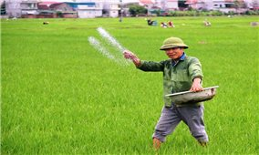Nghệ An: Thời tiết thuận lợi, nông dân xuống đồng sớm để chăm lúa