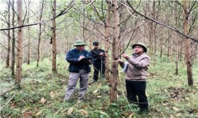 Nhận giao khoán rừng-Lợi ích thấy rõ