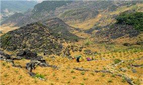 Cải tạo vườn tạp ở vùng cao nguyên đá Hà Giang-Kỳ vọng giảm nghèo từ một nghị quyết