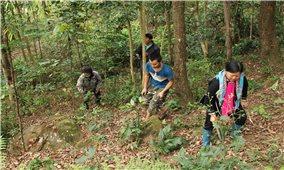 Phát triển rừng gắn với tạo sinh kế cho đồng bào vùng cao