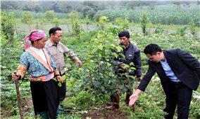 Bất cập trong các dự án hỗ trợ giống cây trồng, vật nuôi: Chuyện cũ nói lại (Bài 1)