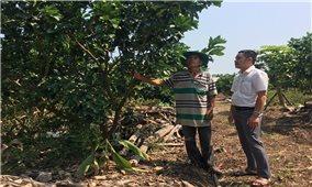 Giải quyết tình trạng sử dụng đất nông nghiệp sai mục đích: Cách làm hay ở Hoài Ân