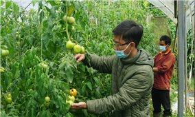 Nông dân Sa Pa tìm giải pháp để vượt qua đại dịch