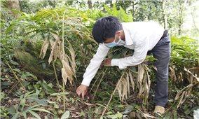 Xã vùng biên Mù Sang khởi sắc từ chuyển đổi cây trồng thích ứng với biến đổi khí hậu