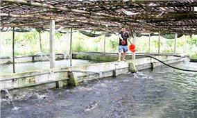 Chuyện nuôi cá làm giàu của bốn anh em ở chân núi Voi Đầm