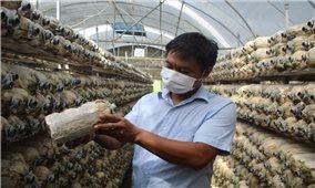 Làm giàu từ mô hình trồng nấm công nghệ cao