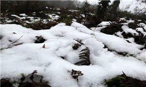 Nhiều khả năng xảy ra mưa tuyết và băng giá ở Lào Cai, Lai Châu trong mấy ngày tới