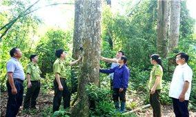 Thái Nguyên: Phát triển mô hình tự quản trong Nhân dân