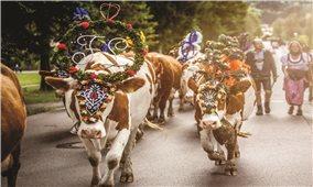 Almabtrieb Lễ hội lùa bò xuống núi