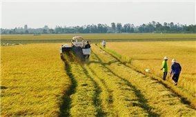 Đất nông nghiệp có được xây dựng nhà ở không?