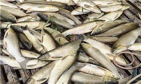 Thủy sản chết hàng loạt trên sông Mã: Sẽ xem xét khởi tố hình sự nếu phát hiện đơn vị gây ô nhiễm