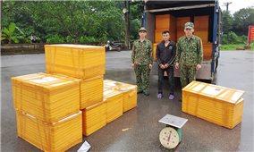 Bắt vụ vận chuyển 500 kg cá tầm nhập lậu