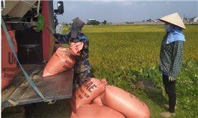 Bắc Giang: Tổ chức thu hoạch lúa, nông sản tại các địa phương giãn cách xã hội