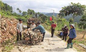 Nông dân vùng cao Nậm Mòn thu nhập cao từ trồng quế