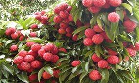Chung tay hỗ trợ nông dân tiêu thụ nông sản tại Bắc Giang