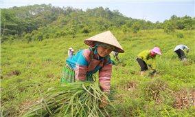 Bảo Yên - Điểm sáng trong sản xuất nông nghiệp ở Lào Cai