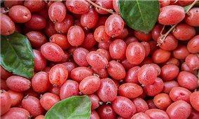 Những bài thuốc chữa bệnh từ cây nhót