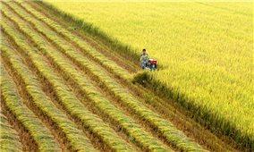 Đầu tư 440 tỷ đồng hạ tầng hỗ trợ hợp tác xã phát triển vùng nguyên liệu nông lâm sản