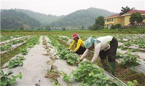 Bước chuyển dịch kinh tế hiệu quả từ nông nghiệp hữu cơ