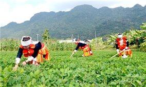 Triển khai Chương trình MTQG phát triển KTXH vùng dân tộc thiểu số, miền núi