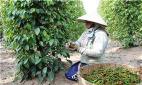 Châu Phi- Thị trường xuất khẩu tiềm năng cho nhiều loại hàng hoá Việt Nam