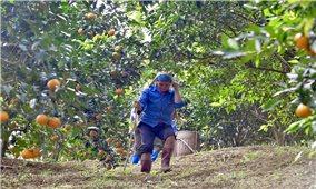 Sản phẩm nông nghiệp đặc sản đưa người dân Bá Thước thoát nghèo