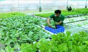 Nông sản hữu cơ của Việt Nam đặt nhiều hy vọng vào thị trường Australia
