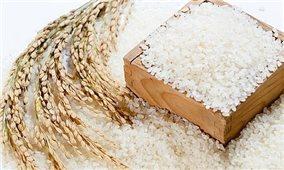 Giá lúa gạo hôm nay 7/7: Giá lúa gạo đi ngang