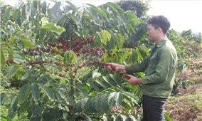 Thanh niên DTTS làm nông nghiệp thuận tự nhiên