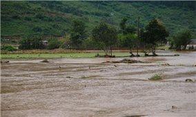 Lâm Đồng đối mặt lũ lịch sử, khẩn trương sơ tán người dân