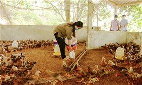 Bắc Giang khôi phục sản xuất nông nghiệp sau dịch