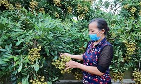 Kết nối cung cầu, tiêu thụ nhãn và nông sản tỉnh Hưng Yên
