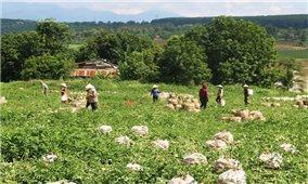 Người Đắk Lắk, Đắk Nông gom rau xanh, củ cải gửi tặng TP. Hồ Chí Minh chống dịch