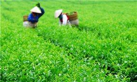 Sầu riêng, Chè của Việt Nam chinh phục thị trường Australia