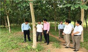 Nỗ lực xây dựng nông thôn mới ở một xã vùng biên