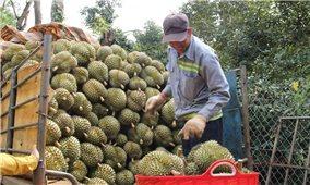 Đắk Lắk: Linh hoạt các giải pháp thúc đẩy tiêu thụ nông sản