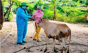 Phú Yên: Trao bò sinh sản cho đồng bào dân tộc thiểu số nghèo huyện Sông Hinh
