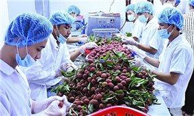 """Nông sản Việt Nam """"được lòng"""" thị trường EU"""