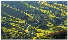"""Tổ chức trực tuyến Chương trình du lịch """"Qua những miền di sản ruộng bậc thang"""" Hoàng Su Phì"""