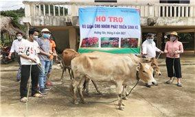 Hướng Hóa (Quảng Trị): Trao 26 con bò giống sinh sản cho các nhóm phát triển sinh kế