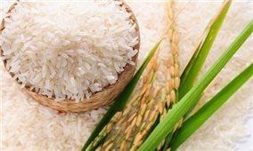 Việt Nam, vùng đất của gạo ngon nhất thế giới