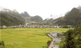 Quyến rũ mùa vàng trên cánh đồng Mường Khương ở Lào Cai