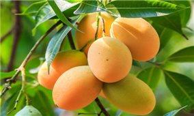 Nông sản Việt Nam được ưa chuộng tại thị trường Australia