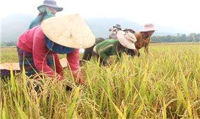 Hướng Hóa (Quảng Trị): Hỗ trợ 16.852 kg lúa giống cho đồng bào Bru Vân Kiều, Pa Kô