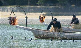 Đánh bắt cá bằng chim cốc ở Nhật Bản