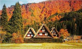 Làng cổ Shirakawa-go vào Thu