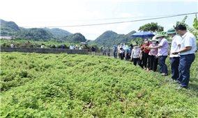 Lạng Sơn: Kết nối tiêu thụ sản phẩm thạch đen