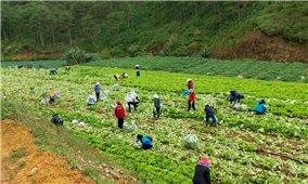 Lâm Đồng: Tặng hơn 6.000 tấn nông sản sạch cho TP. Hồ Chí Minh